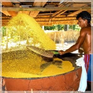 Com as cheias dos rios, os ribeirinhos deixaram de plantar macaxeira, encarecendo ainda mais o produto típico da mesa do amazonense.
